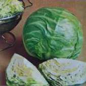 Early Round Dutch Cabbage CB56-50_Base