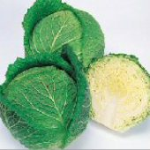 Savoy Ace Cabbage CB50-50_Base
