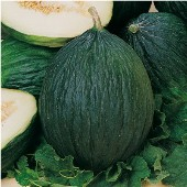 Tendral Verde Tardif Melons CA58-20_Base