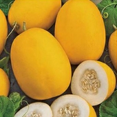 Vine Peach Melons CA61-20_Base