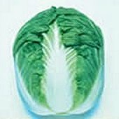 Blues Chinese Cabbage CB21-50_Base