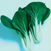 Pac Choi Chinese Cabbage CB7-50_Base