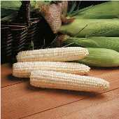 Avalon Corn CN52-50_Base
