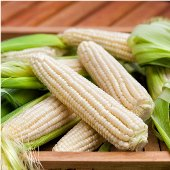 Silver Queen Corn CN2-50_Base