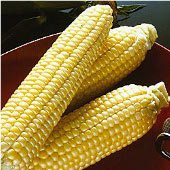 Sugar Buns Corn CN47-50_Base