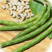 California Blackeye No. 46 Cowpeas CP28-50_Base