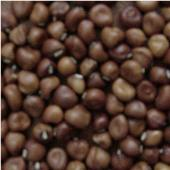 Dimpled Brown Cowpeas CP14-50_Base