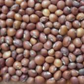 Knuckle Purple Hull Cowpeas CP2-50