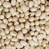 Mississippi Cream Cowpeas CP22-50_Base