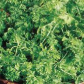 Upland Cress CR1-100_Base