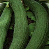 Armenian Metki Dark Green Cucumbers CU54-20_Base