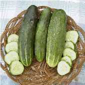 Ashley Cucumbers CU46-20_Base