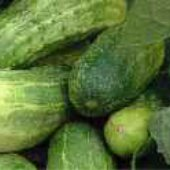Chicago Pickling Cucumbers CU6-20_Base