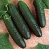 General Lee Cucumbers CU31-20_Base