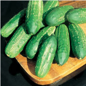 Regal Cucumbers CU71-20_Base