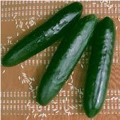Stonewall Cucumbers CU4-20_Base