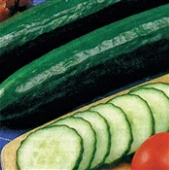Sweet Slice Cucumbers CU26-10_Base