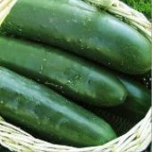 Thunder Cucumbers CU105-20_Base