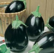 Black King Eggplants EG73-20_Base
