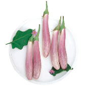 Bride Eggplants EG74-20_Base