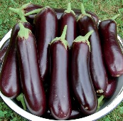 Diamond Eggplants EG38-20_Base