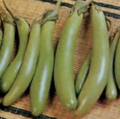Harabegan Eggplants EG65-20_Base