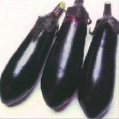 Money Maker II Eggplants EG56-20