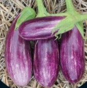 Pandora Striped Rose Eggplants EG53-20_Base