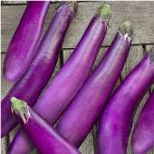 Ping Tung Long Eggplants EG17-20_Base