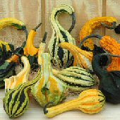 Autumn Wings Gourds (Small) GD52-10_Base