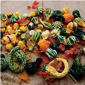 Autumn Wings Gourds (Large) GD51-10_Base