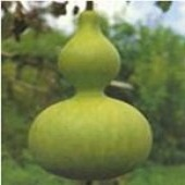 Calabash Gourds GD3-10_Base