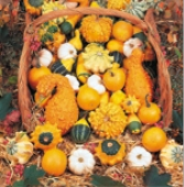 Mixed Gourds (Small) GD12-10_Base