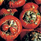 Turk's Turban Gourds GD27-10_Base