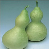 Water Jug Gourds GD40-10_Base
