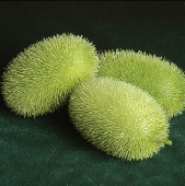Wooly Bear Gourds GD59-10_Base