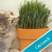 Catgrass HB121-100_Base