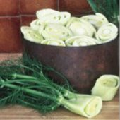 Florence Fennel HB37-100_Base