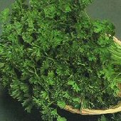 Forest Green Parsley HB56-100_Base