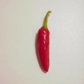 10478 Hot Peppers HP2176-10