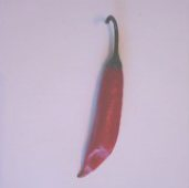 Capsicum Baccatum USDA #596056 Hot Peppers HP927-10