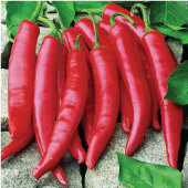 Amando Hot Peppers HP325-10_Base