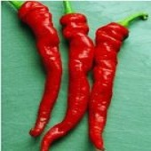 Cayenne Large Thick Hot Peppers HP42-20_Base