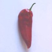 Crimson Chile Hot Peppers HP349-20