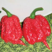 Carolina Reaper Hot Peppers (Red) HP2293-5