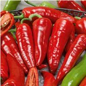 Giant Ristra Hot Peppers HP2243-10