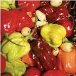 Habanero Hot Pepper Mix HP2058-20_Base
