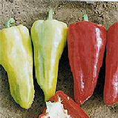 Hungarian Medium Hot - Hot Pepper HP114-10_Base