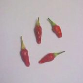 Jamaican Hot Pepper (Red Small Type 1) HP731-10