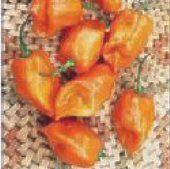 Jamaican Scotch Bonnet Hot Peppers (Orange Strain 1) HP134-10_Base